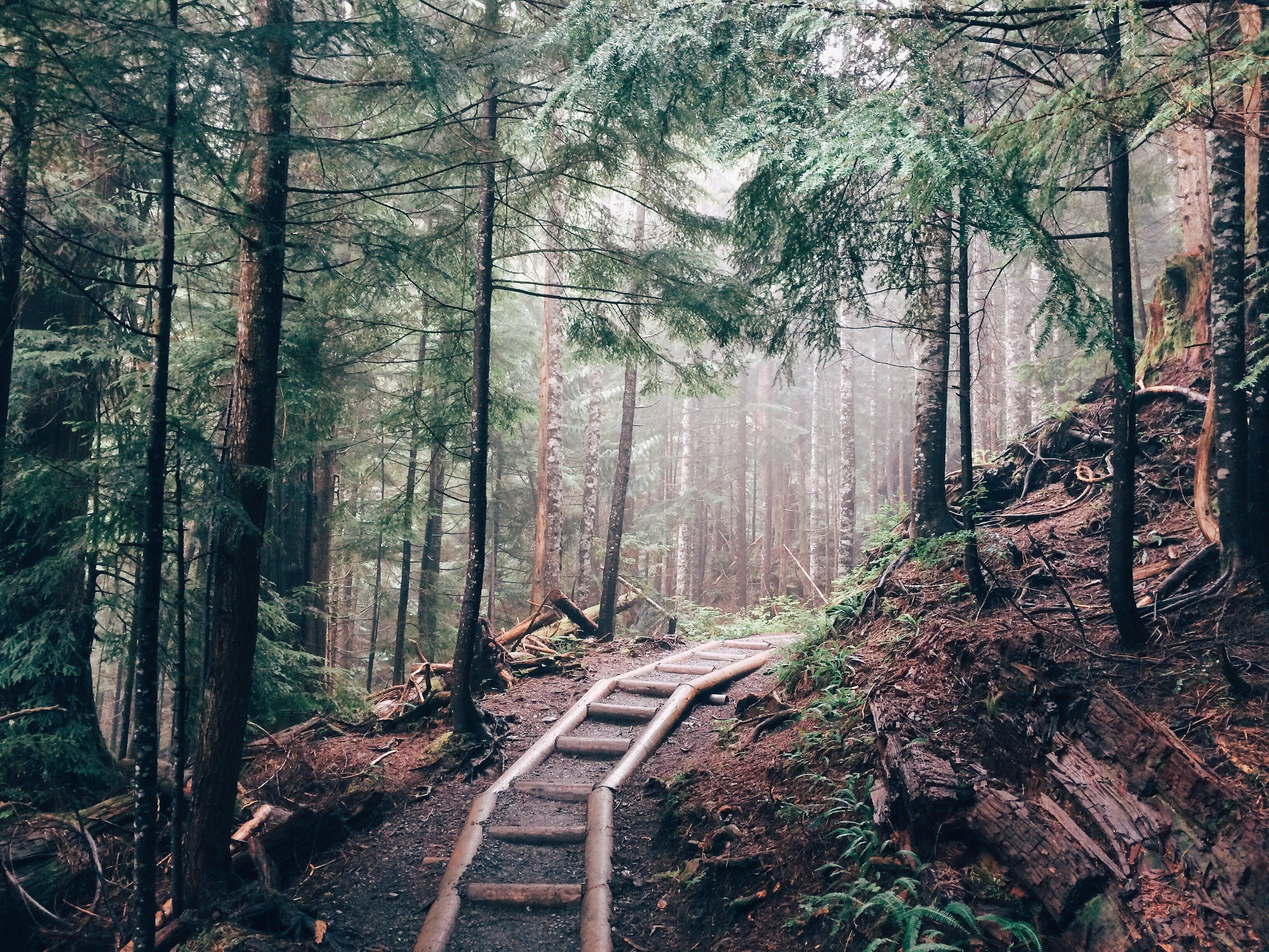 Fotos de stock gratuitas de arboles, bosque, camino, madera