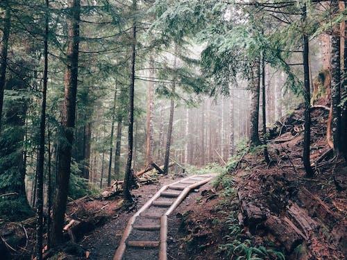 Foto d'estoc gratuïta de arbres, bosc, boscos, Camí