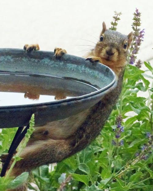 Δωρεάν στοκ φωτογραφιών με σκίουρος