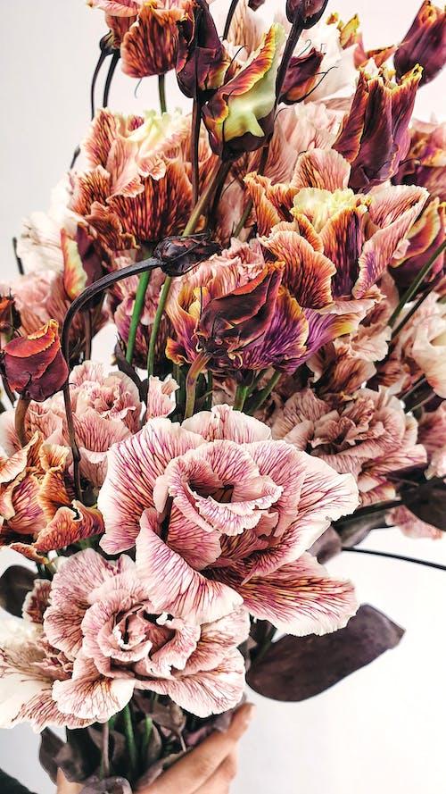 Immagine gratuita di anonimo, aroma, aromatico