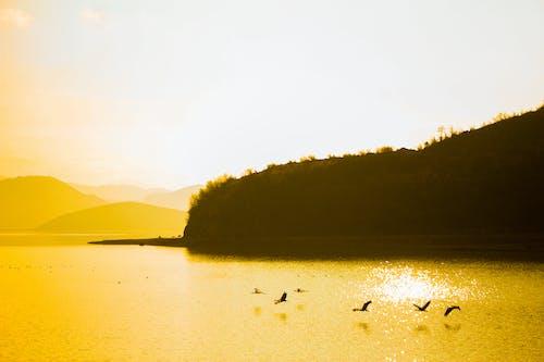 Kostnadsfri bild av berg, fåglar, Kina