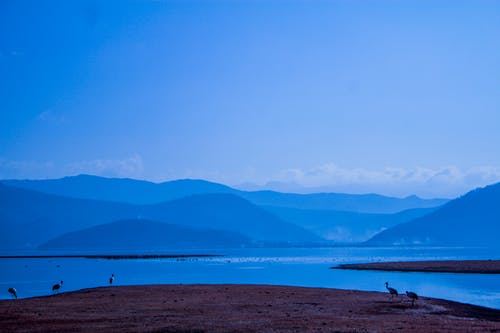 Kostnadsfri bild av berg, fåglar, fredlig