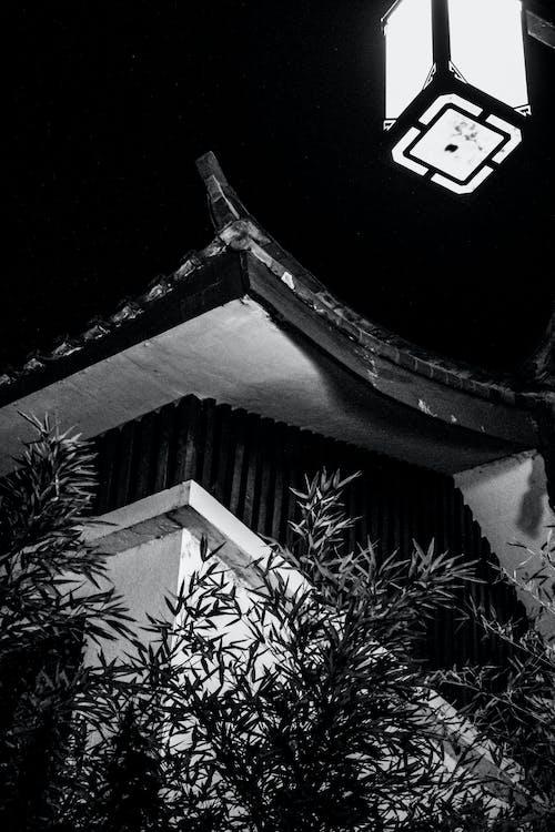 Kostnadsfri bild av bambu, distriktet gucheng, fredlig