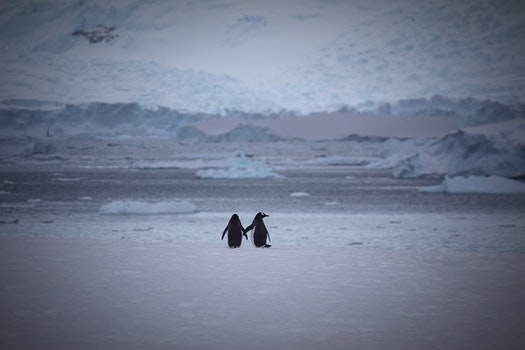 Two Penguins at Snow Area