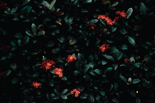Green bush with red flowers