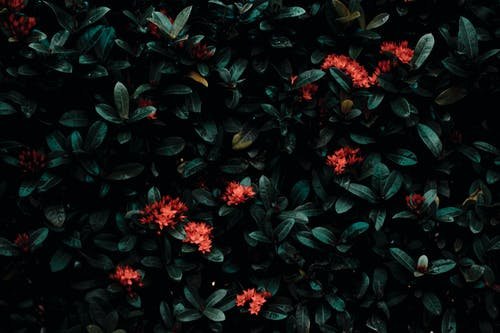 Bright flowers blooming on green bush