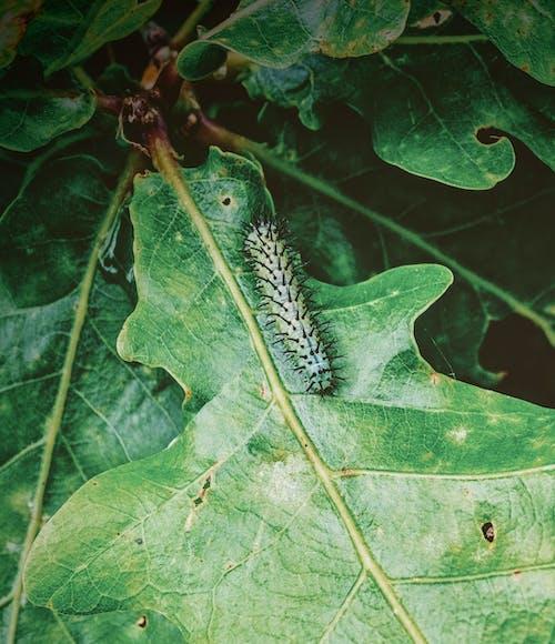 곤충, 나방, 나비의 무료 스톡 사진