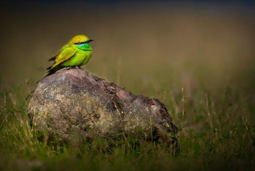 Small bright bird perching on stone