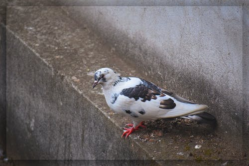 冬季, 小鳥 的 免費圖庫相片