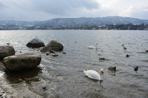 Free stock photo of lac, mountain, switzerland, zurich