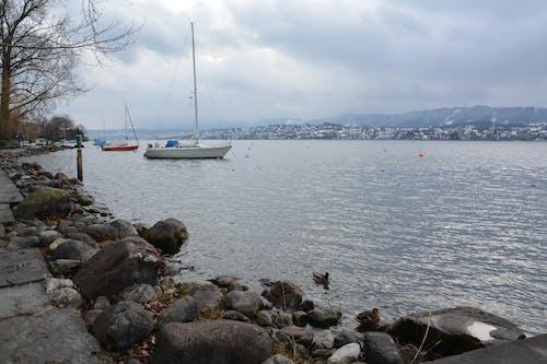 Free stock photo of boat, lac, mountain, switzerland