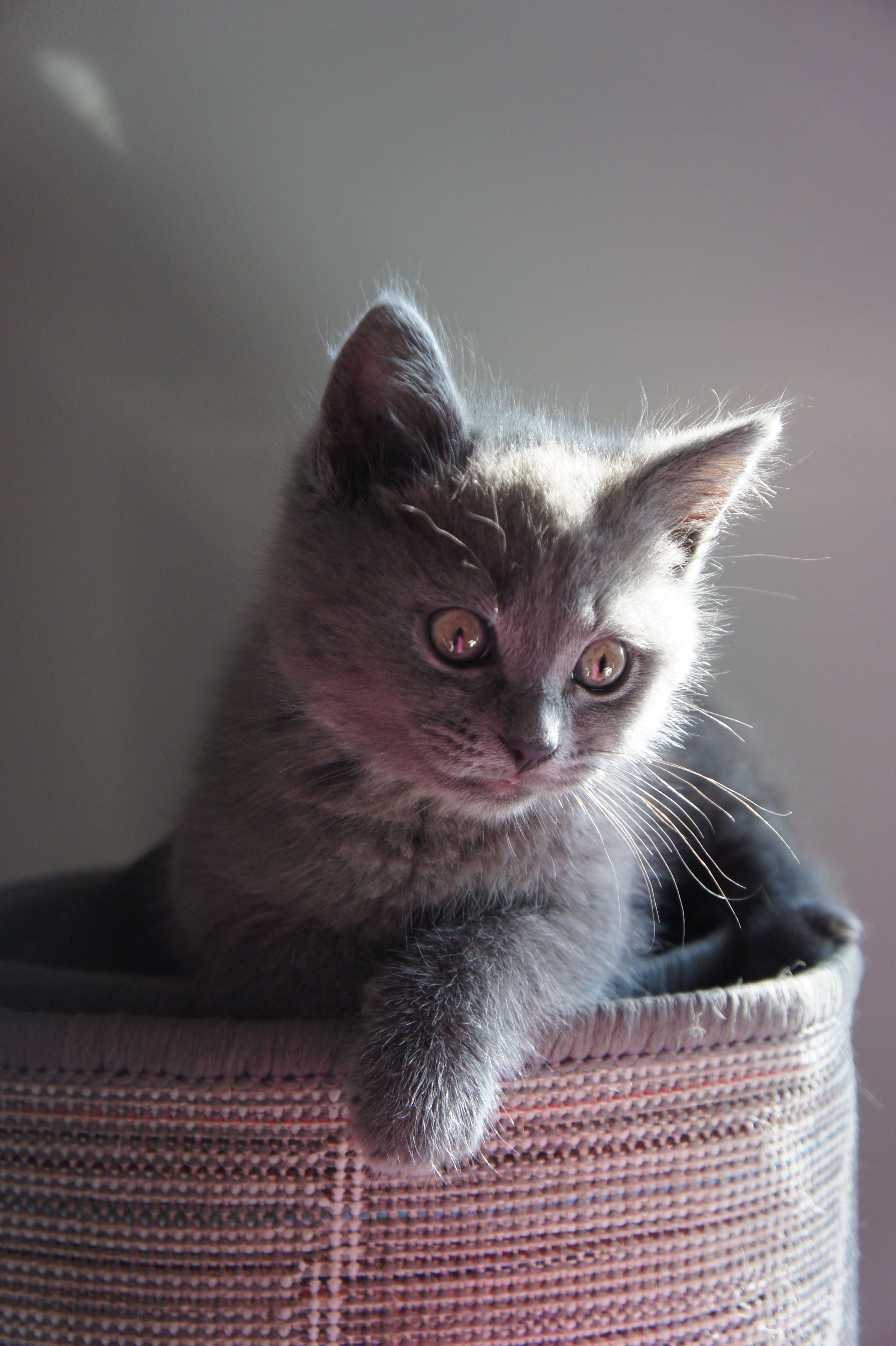 Fotos de stock gratuitas de animal, bote, gato