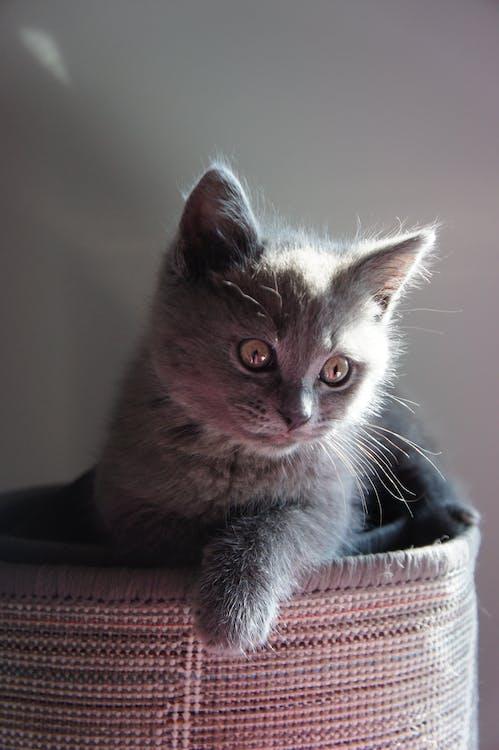 動物, 小貓, 貓