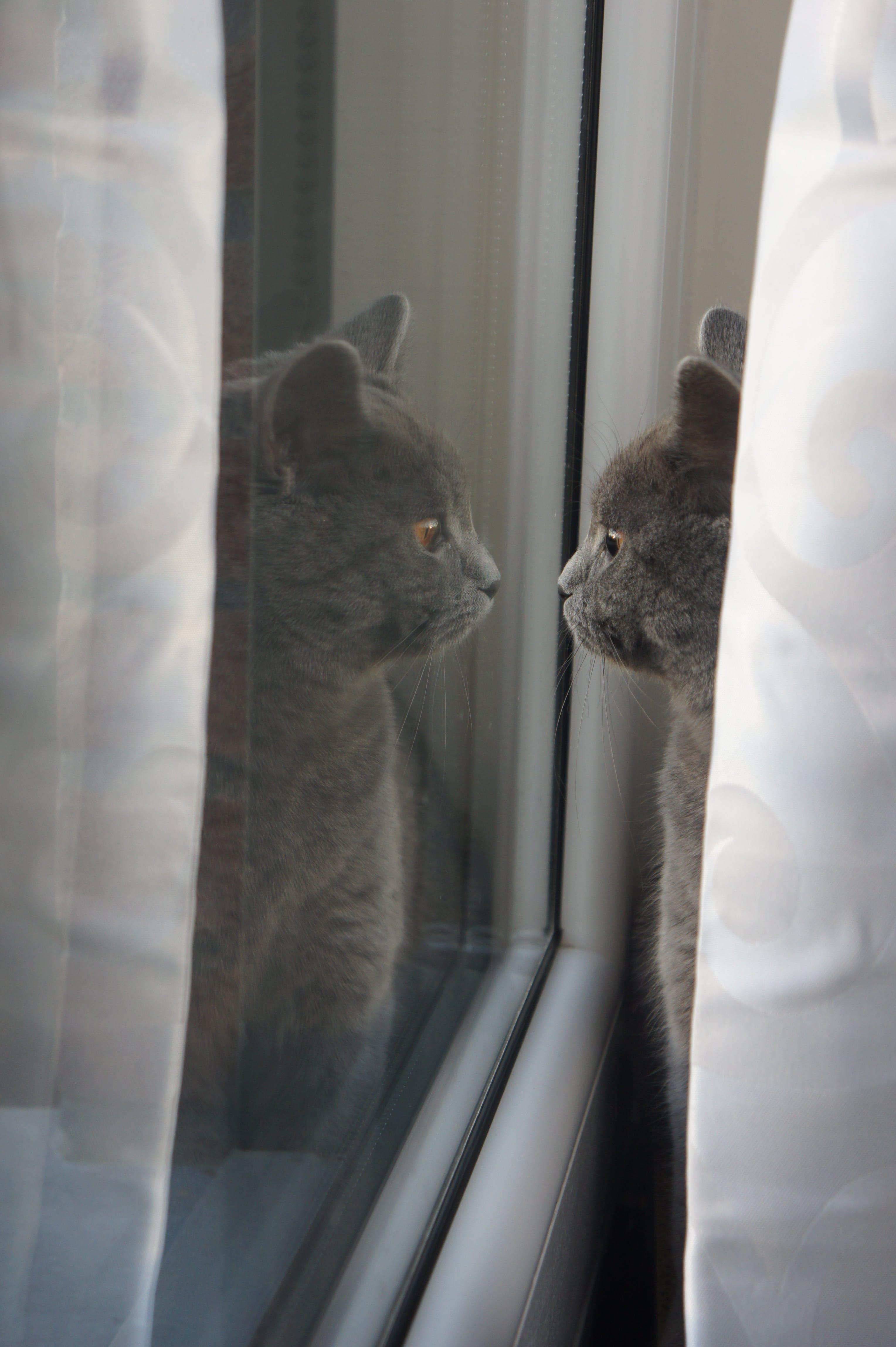 Fotos de stock gratuitas de animal, gato