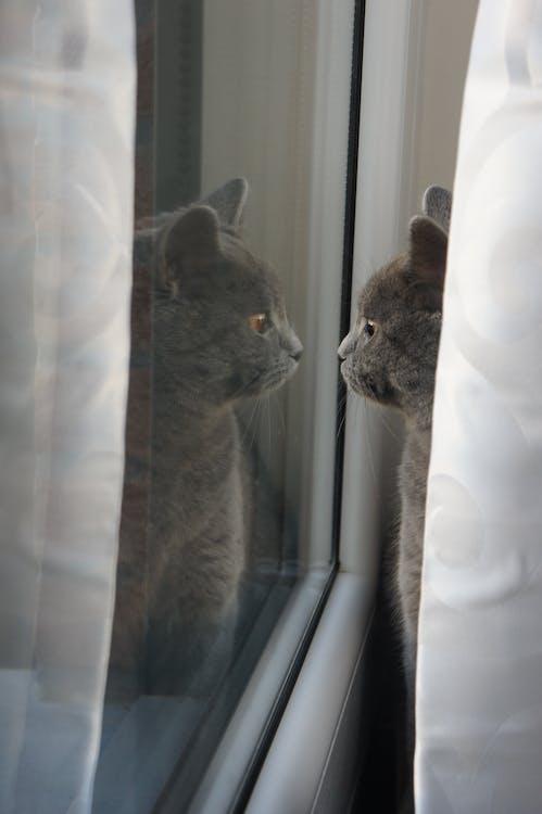 動物, 貓