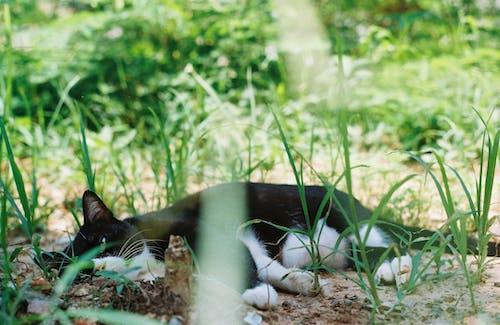 Δωρεάν στοκ φωτογραφιών με #cat #chubby #film #filmcamera #iusefilm