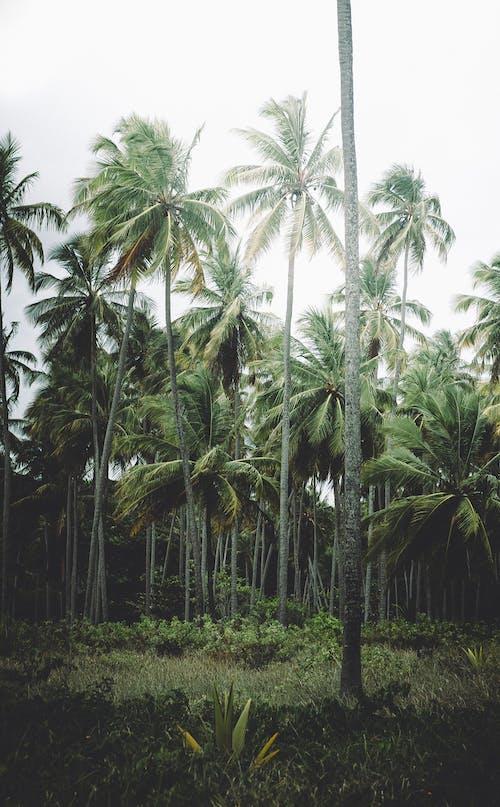 Photos gratuites de arbre, bois, détente