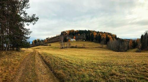 Foto profissional grátis de árvores, enlameado, estrada empoeirada, floresta