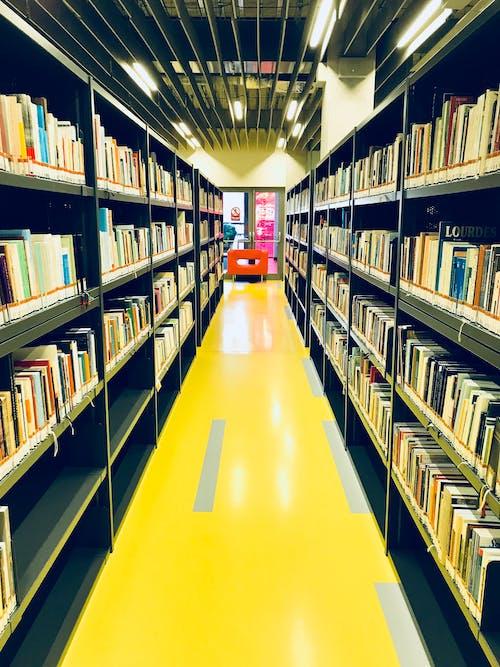 Foto profissional grátis de aluno, biblioteca, cor, escola