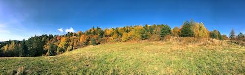 Foto profissional grátis de árvores, campo, céu azul, ecológico