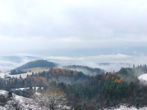Free stock photo of black forest, fog, foggy, hangover