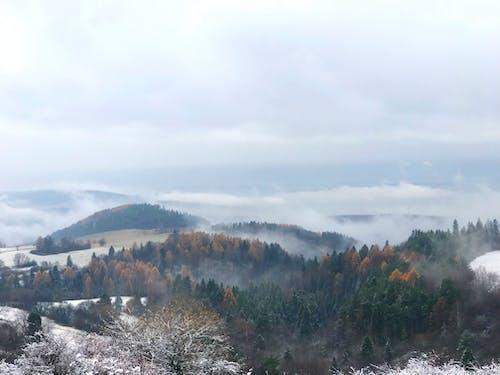 Foto profissional grátis de árvores, enevoado, Eslováquia, Floresta Negra
