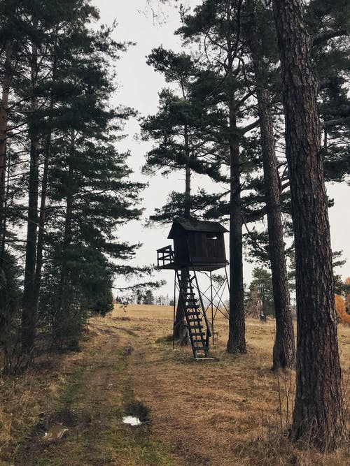 Free stock photo of aforestation, forest, hunting, running track