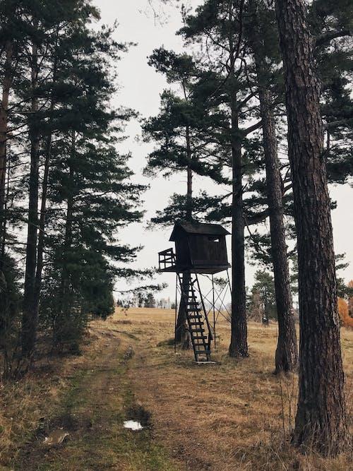 Foto profissional grátis de árvores, caçando, floresta, florestamento
