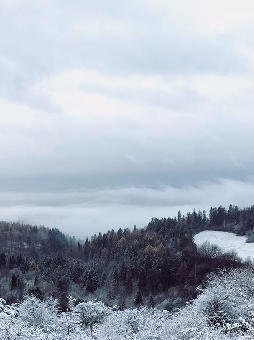 Free stock photo of cloudy sky, fog, forest, freeze