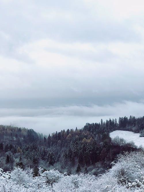 Foto profissional grátis de árvores, branco, congelar, floresta