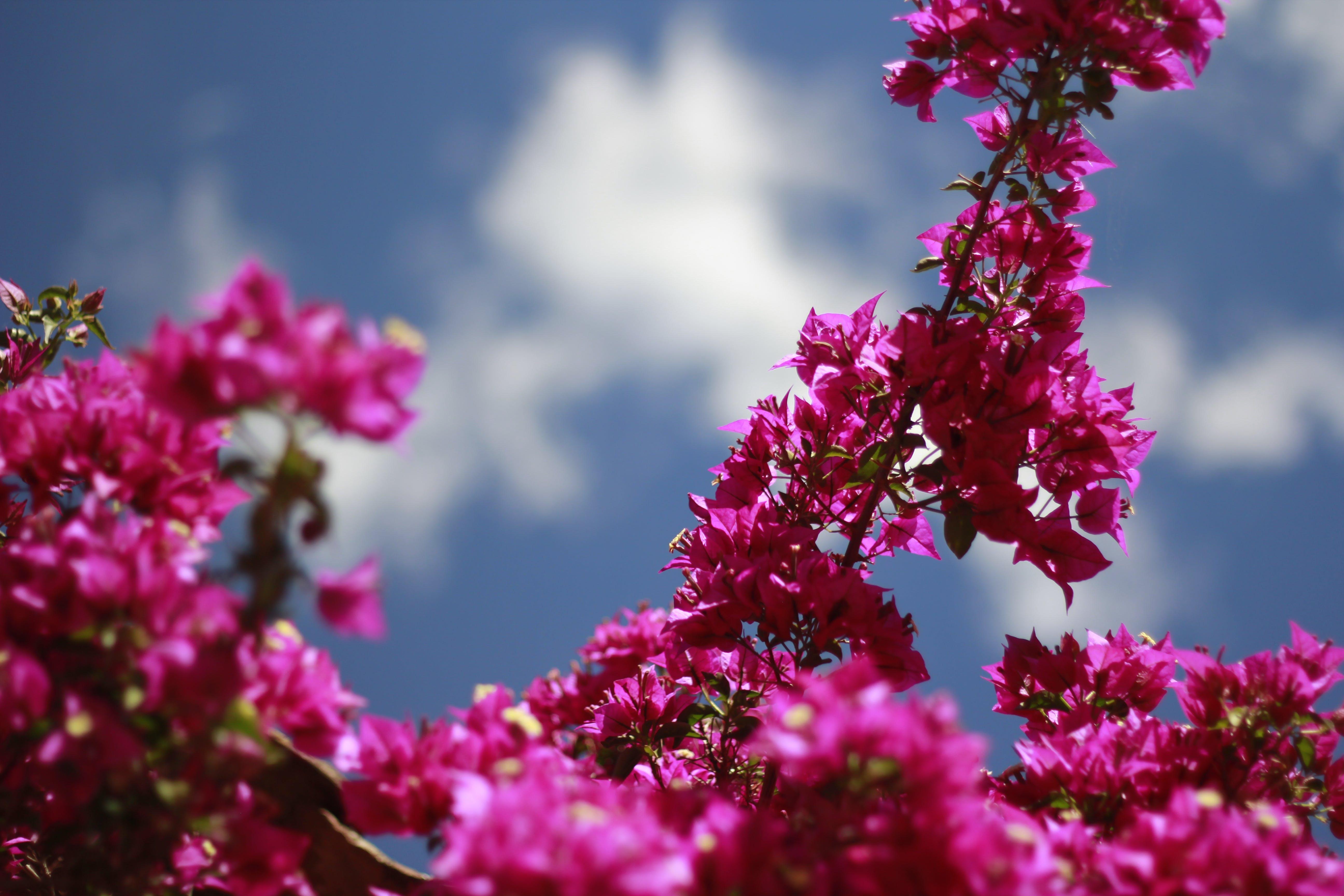 Free stock photo of blue sky, flowers, purple, purple flowers