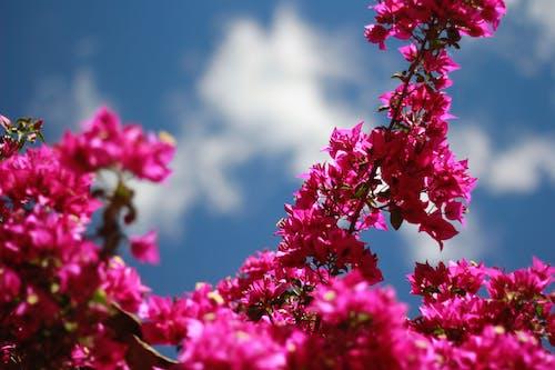 Základová fotografie zdarma na téma fialová, fialové květiny, květiny, modrá obloha