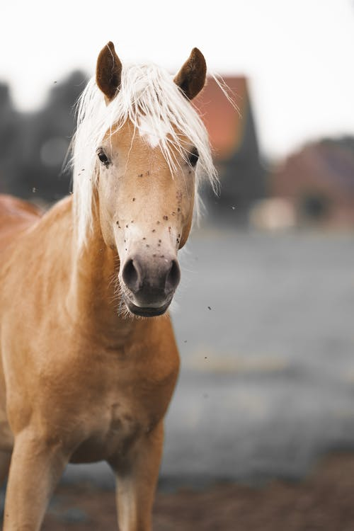 Young chestnut horse standing in countryside