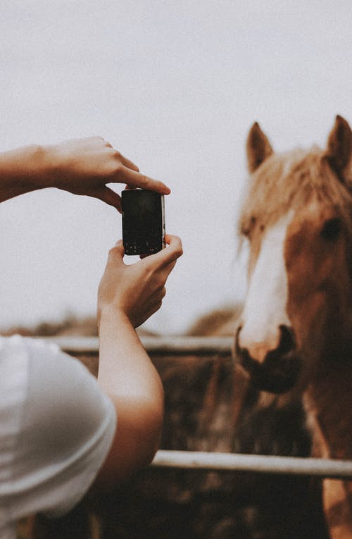 Crop unrecognizable person with digital photo camera taking picture of horse standing in paddock in countryside