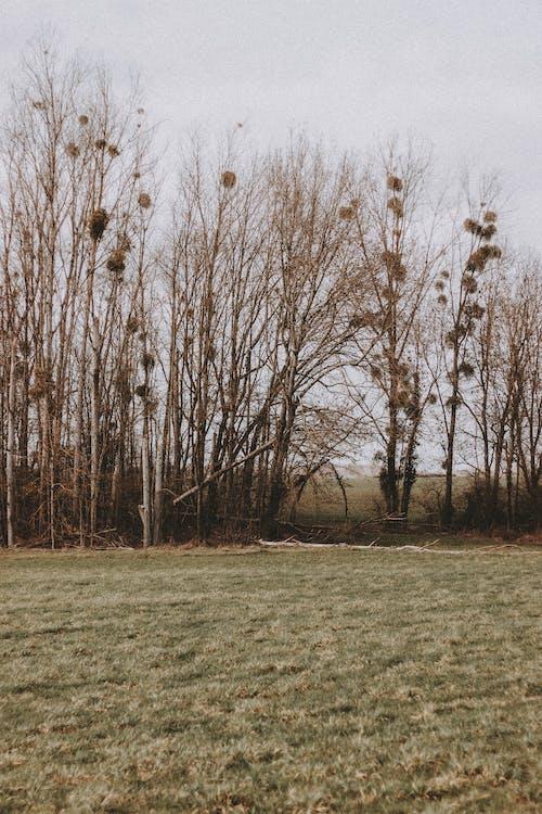 Photos gratuites de arbre, automne, botanique