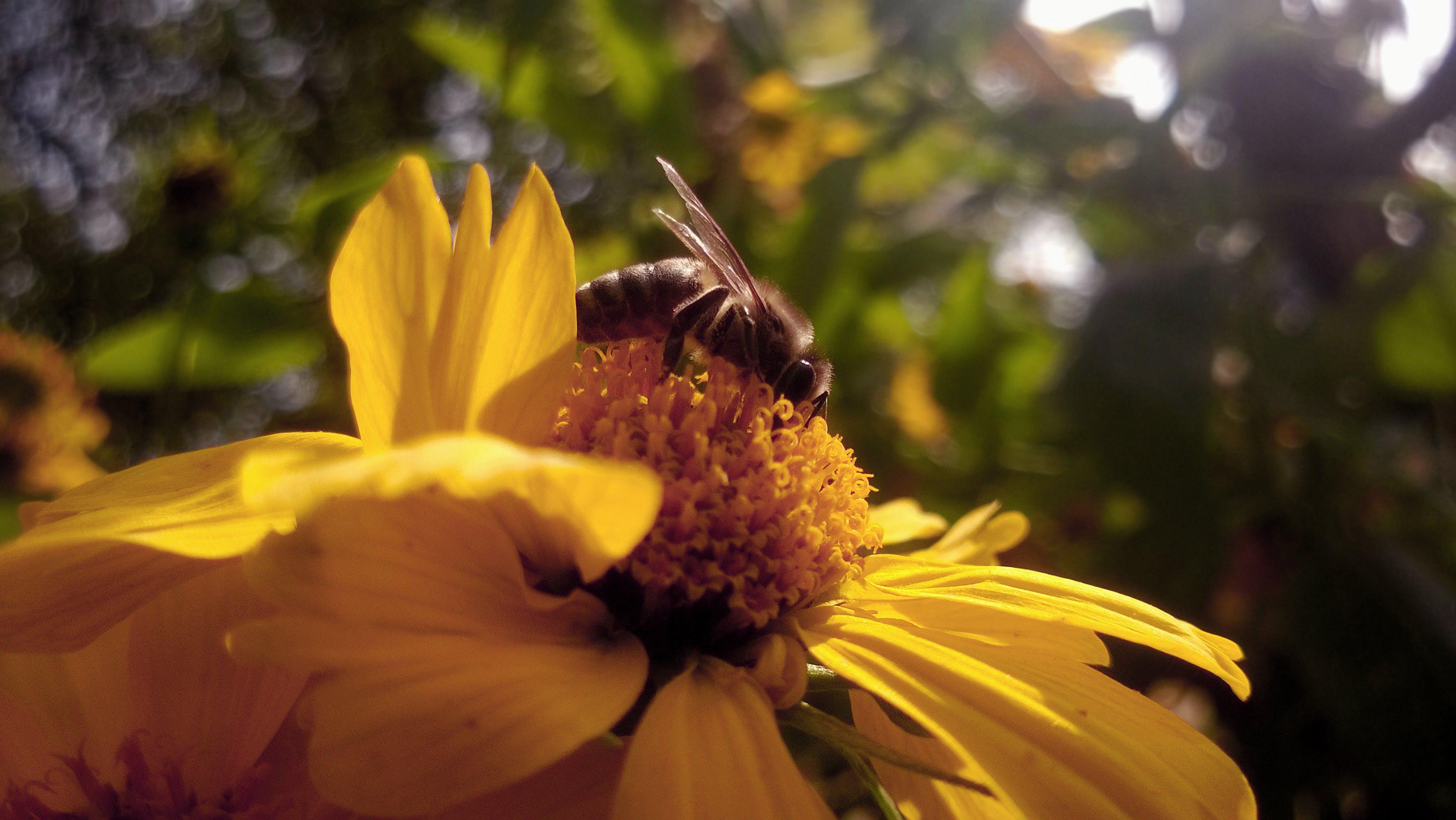 Free stock photo of autumn, bee, light, nature