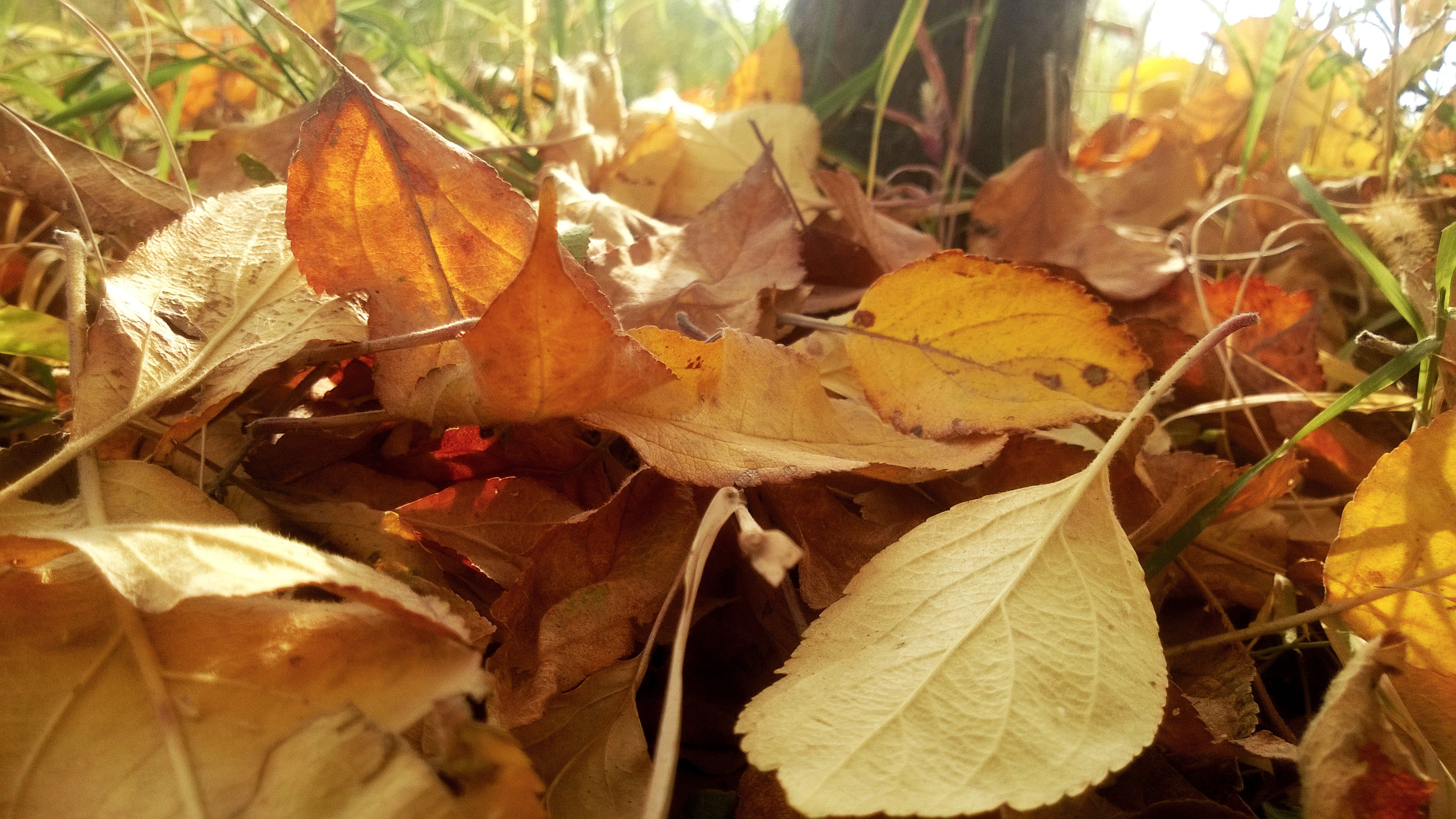 Free stock photo of autumn, leaves, nature