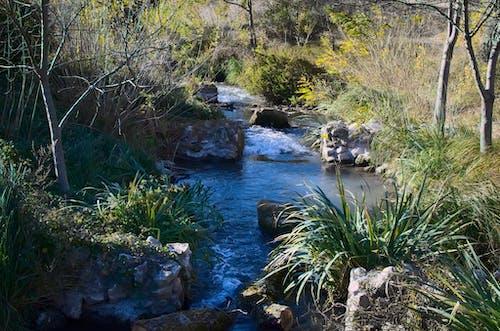 Free stock photo of eau, landscape, nature