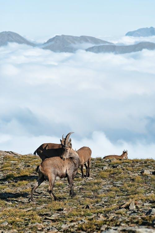 Brown Deer on Green Grass Field Under White Clouds