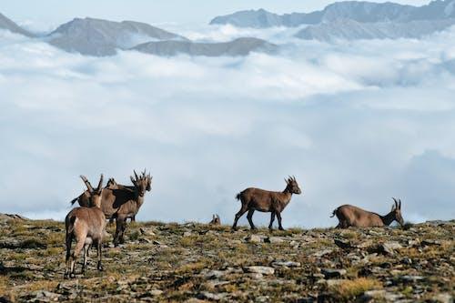 Three Brown Deer on Green Grass