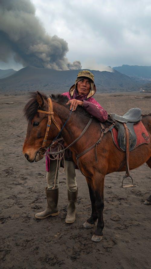 Бесплатное стоковое фото с caballus, equus, атмосфера