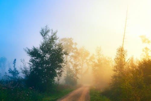 Бесплатное стоковое фото с дерево, дымка, за городом