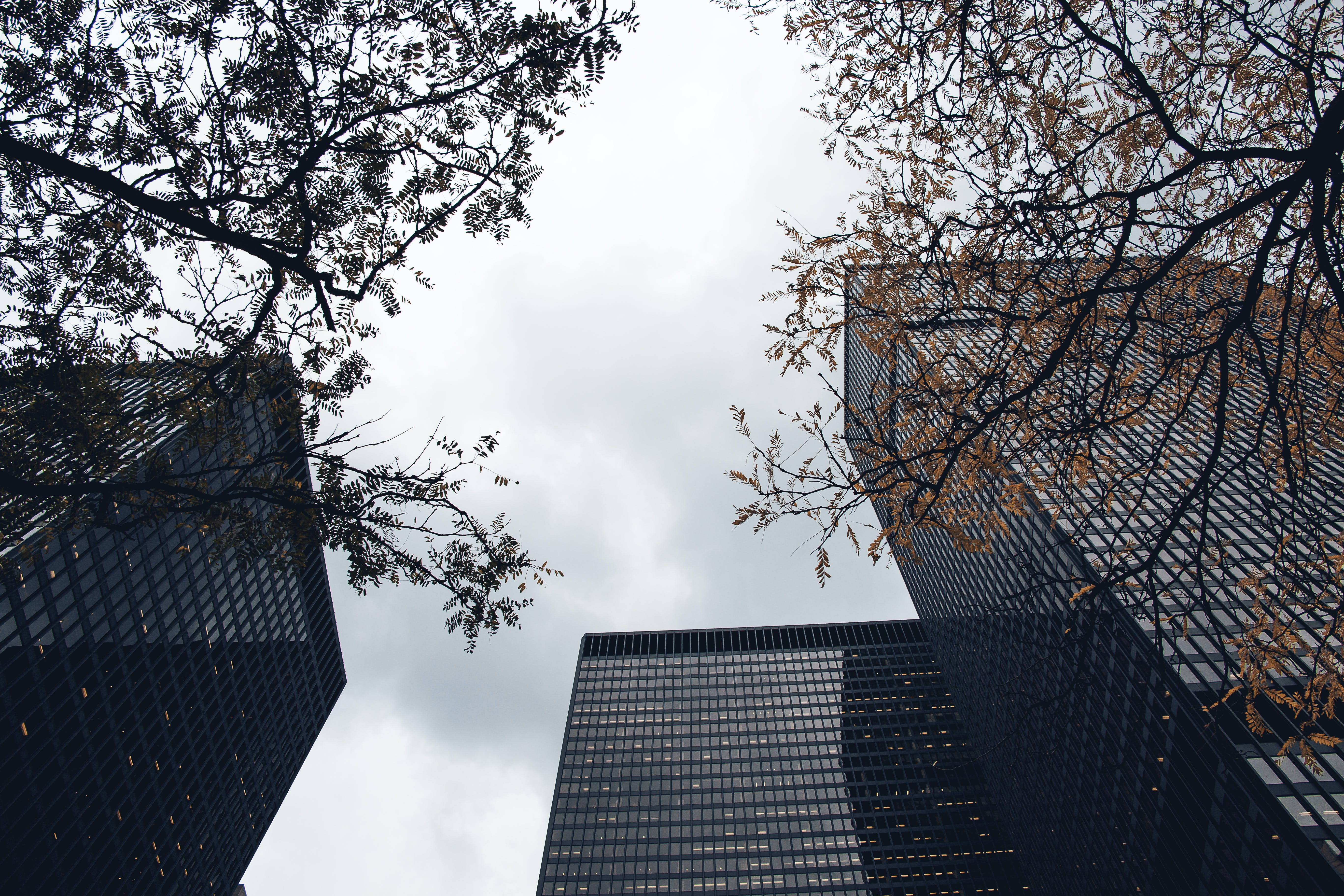Worms Eye View of High Rise Buildings