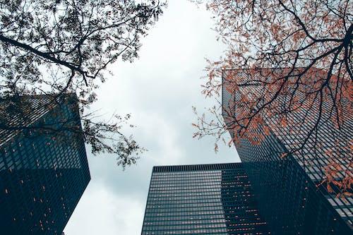 ガラス窓, シティ, スカイライン, トロントの無料の写真素材