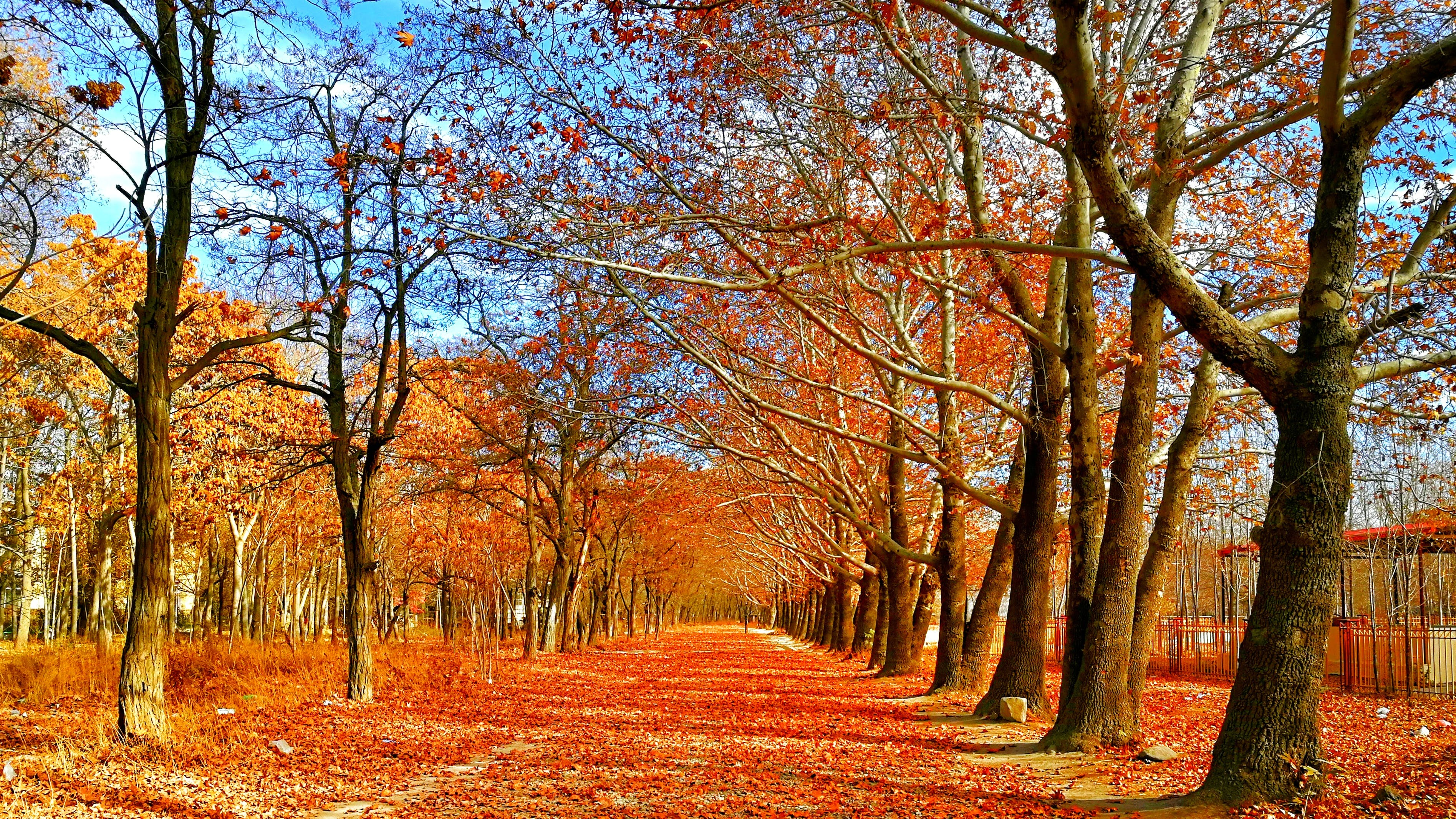 Pave Covered on Red Leaf Between Trees
