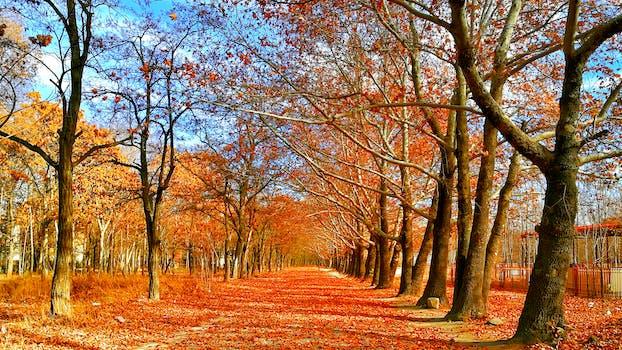1000+ Beautiful Autumn Leaves Photos · Pexels · Free Stock