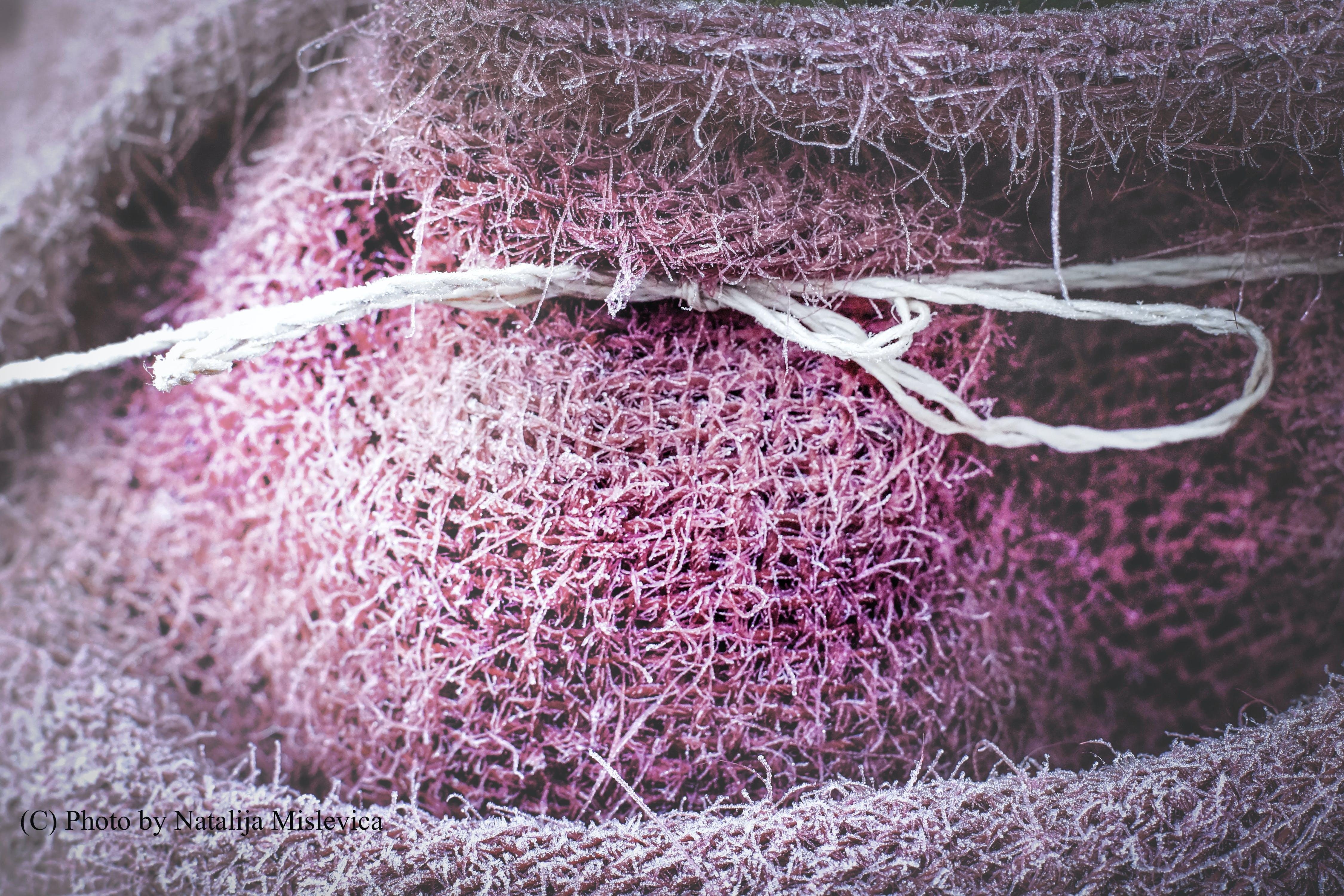 Kostenloses Stock Foto zu einfrieren, faden, garten, tuch