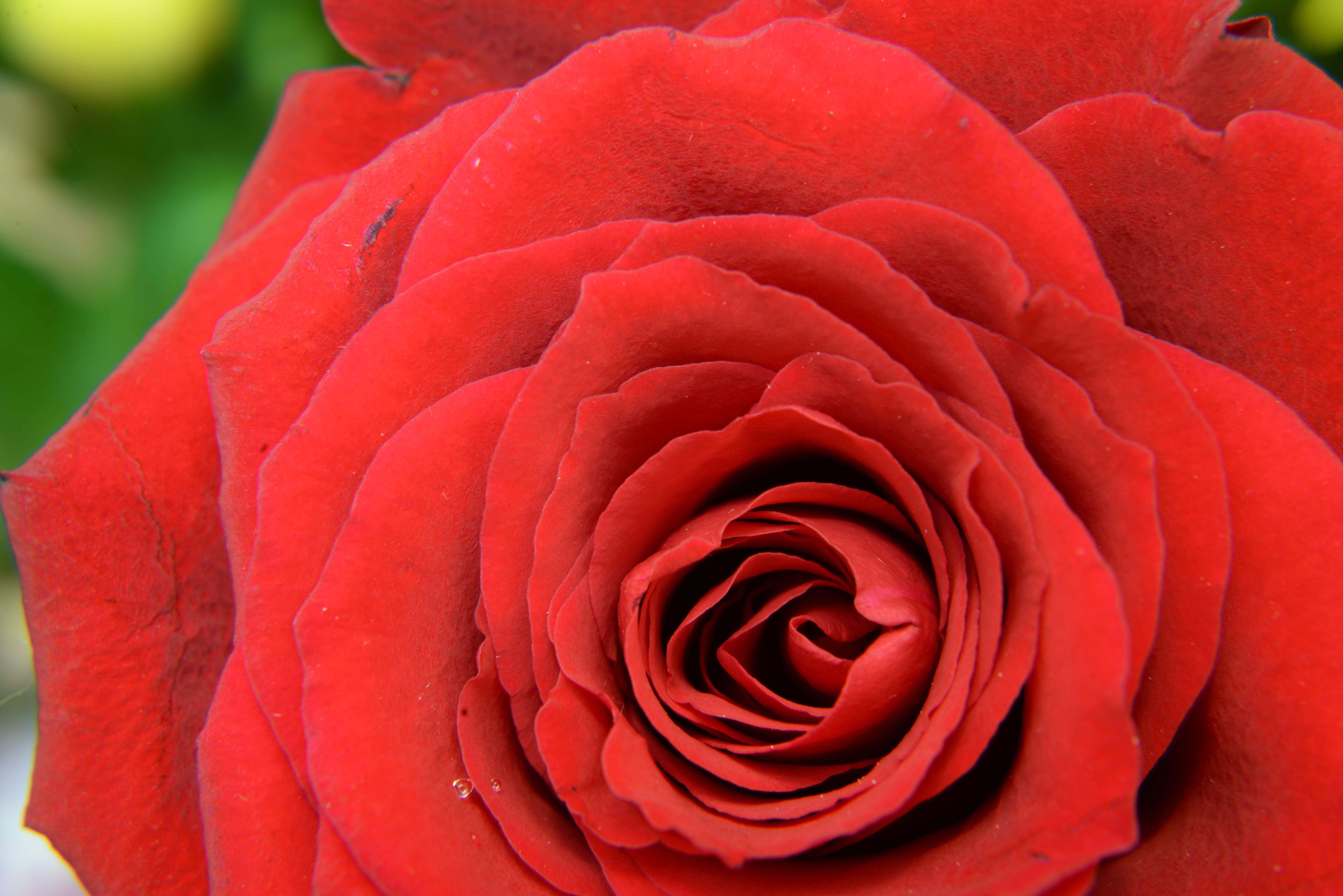 Red Flower