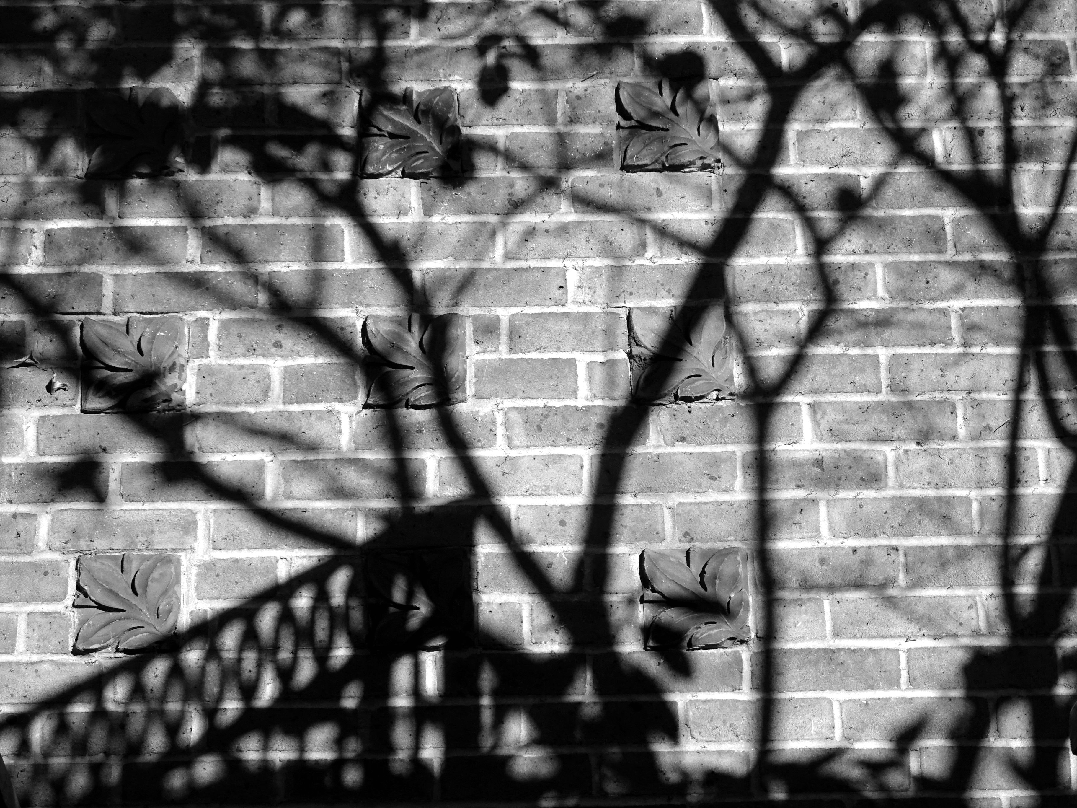 Black and white photo of shadows on the wall · free stock photo