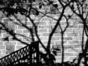Black and White Photo of Shadows on the Wall